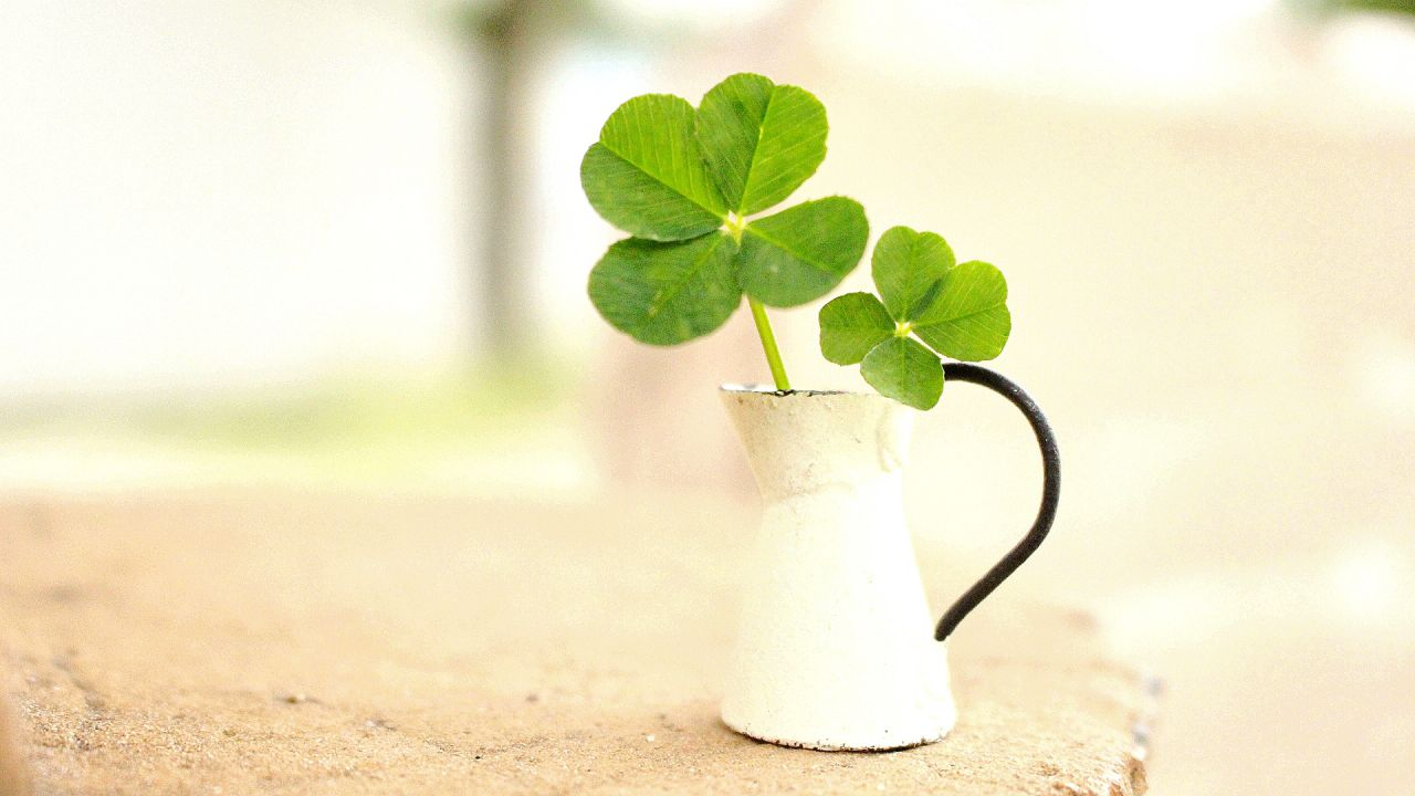 https://www.aroma-life.happy-clovers.com/wp-content/uploads/2020/09/PotCloverMV1280.jpg